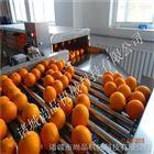 南京血橙清洗流水线厂家