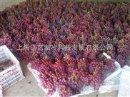 红提葡萄水果气调冷库建造造价