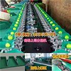 XGJ-QZ广东梁化青枣分选机,海南称重式分选青枣大小的机器,云南选果机