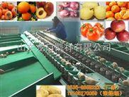 凯祥脐橙选果机,新款水果选果机,高质量、高效率、高精度分选机