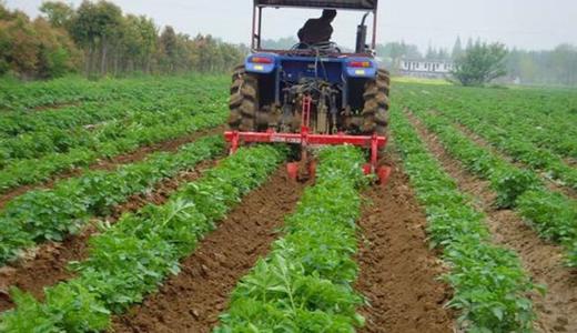 """着力提升蔬菜机械化水平 稳定我国""""菜篮子""""供应"""