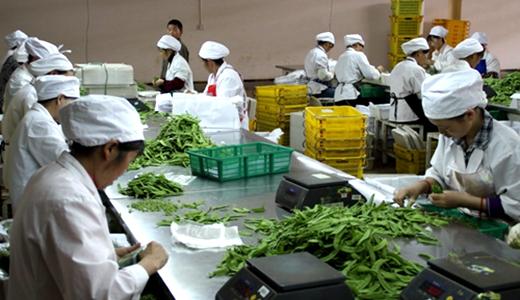 《北京电子商务市场蔬菜分级包装技术规范》出台